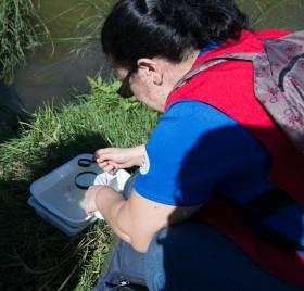 Voluntarios de GEA y Nueva Acrópolis Sevilla colaboran con la Junta de Andalucía
